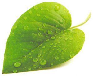 leaf-enironmentally-friendly
